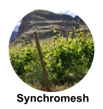 Synchromech Wines Ok Falls wine tours
