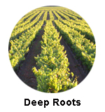 Deep Roots Winery Naramata Wine Tours