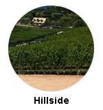 Hillside Winery & Bistro Naramata Wine Tours