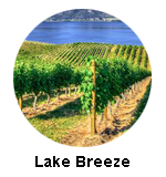 Lake Breeze Vineyards Naramata Bench Wine Tours