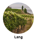 Lang Vineyards Naramata Bench Wine Tour