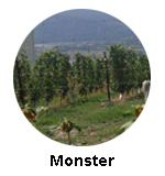 Monster Winery Naramata Bench wine tour