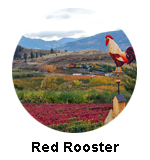 Red Rooster Winery Naramata Bench Tours