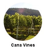 Cana Vines winery oliver wine tour