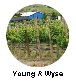 Young & Wyse Winery Osoyoos Wine Tours